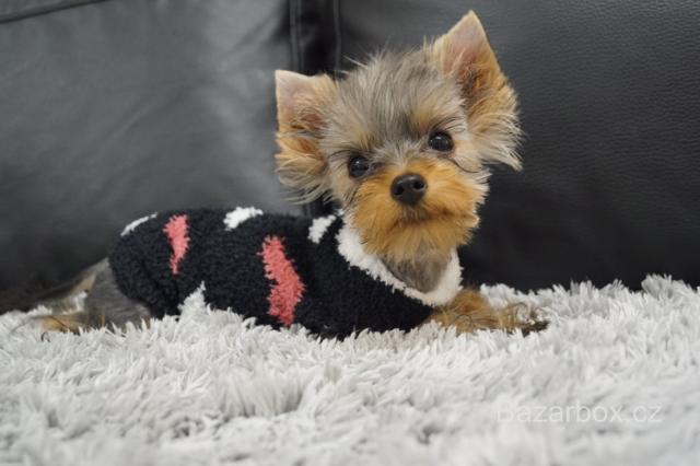 Fenečka Yorkshire Terrier Mini s PP